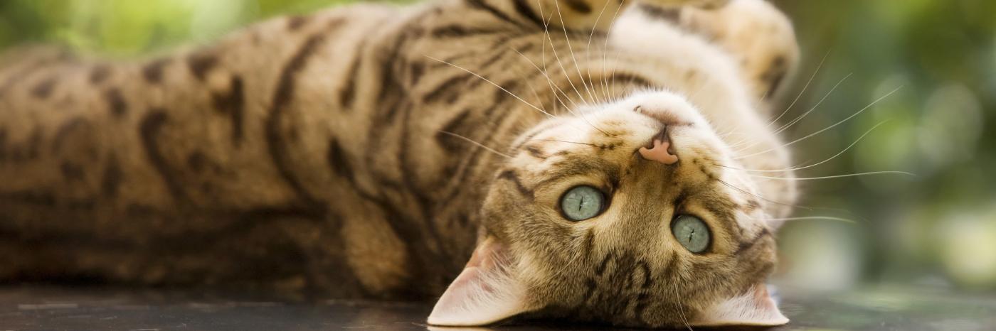 Корм для кошек Urinary в Сумах. Сравнить цены интернет